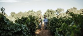 Brad and Randy Lange walking through the vineyard